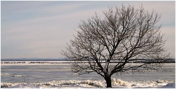 Tree in the ice - Arbre dans la glace