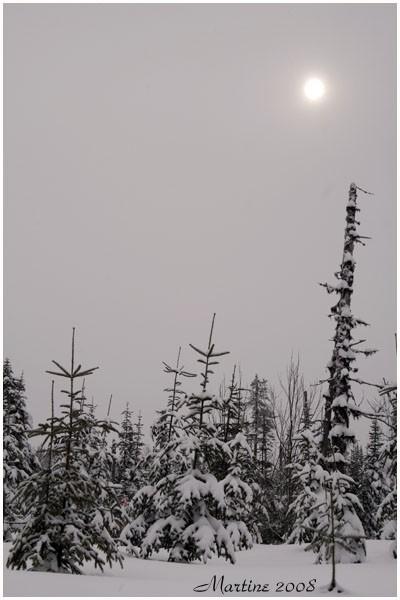 Last winter view - Dernière vue de l'hiver