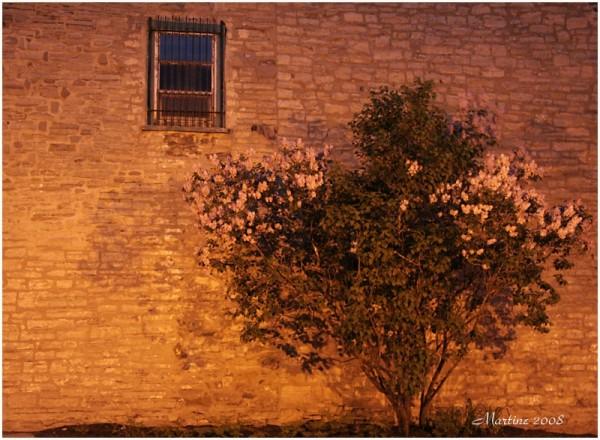 Along an old wall - Le long d'un vieux mur