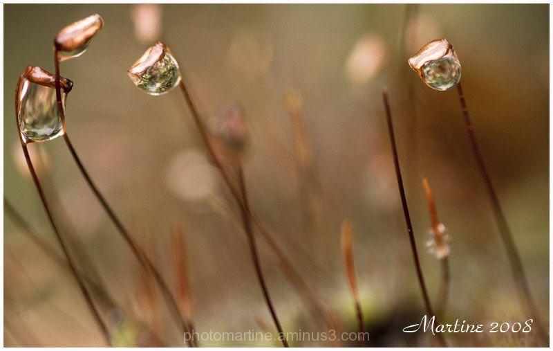 Drops - Goutelettes