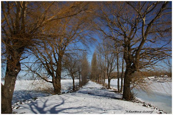 The path - Le sentier