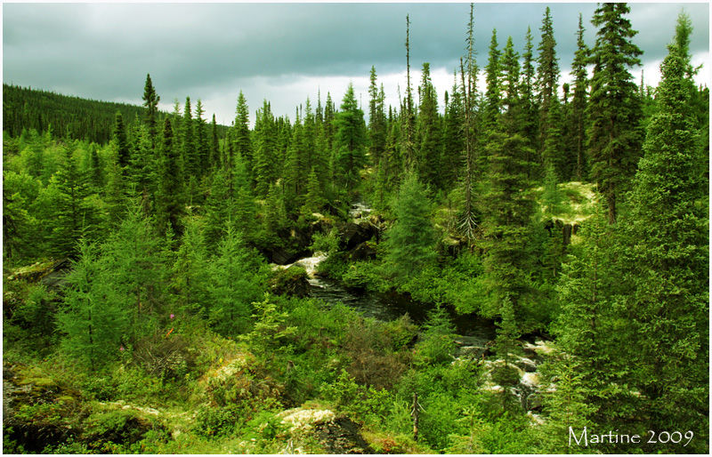 Boreal forest in Québec