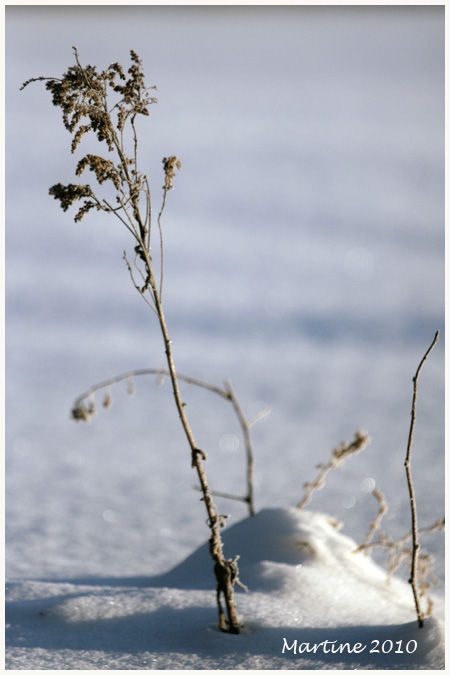 Flowers on snow