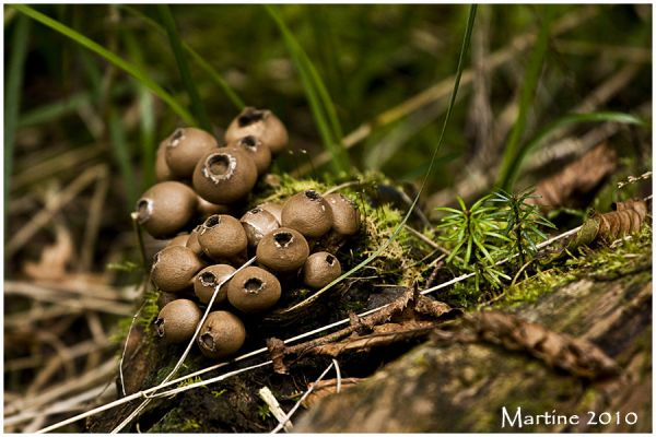 Mushrooms time! - Le temps des champignons!