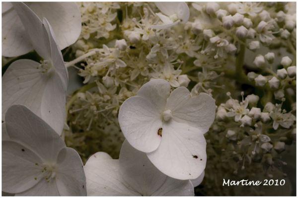 White on white - Blanc sur blanc