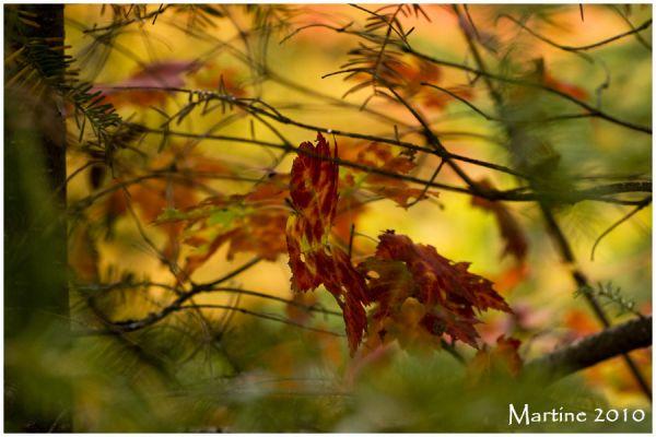 Automn scene - Scène d'automne