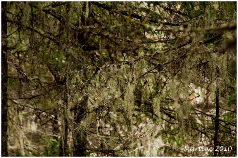 Lichens's forest!