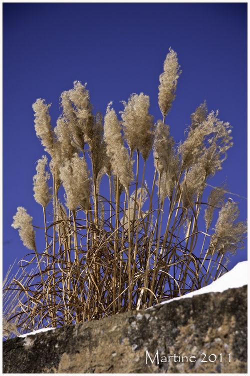 Fleurs d'hiver - Winter's flowers