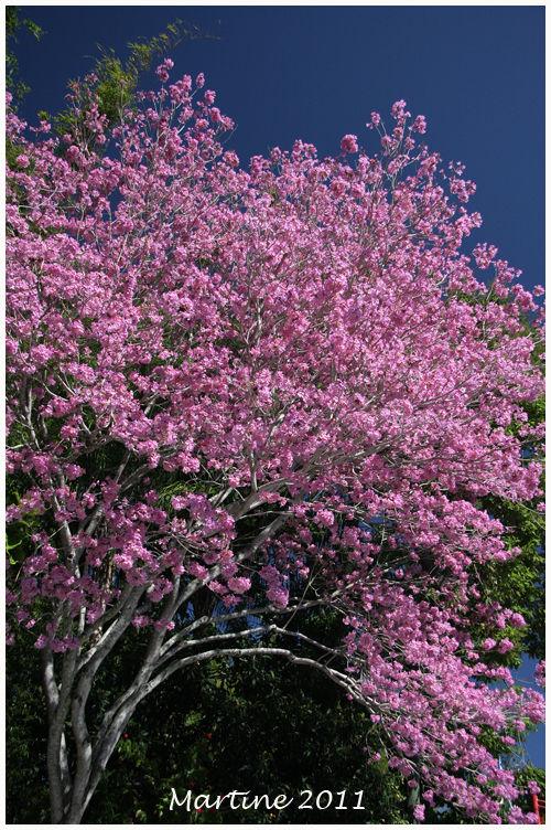 Tree in flowers