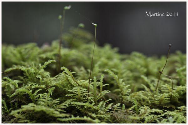 Mosses - Mousses