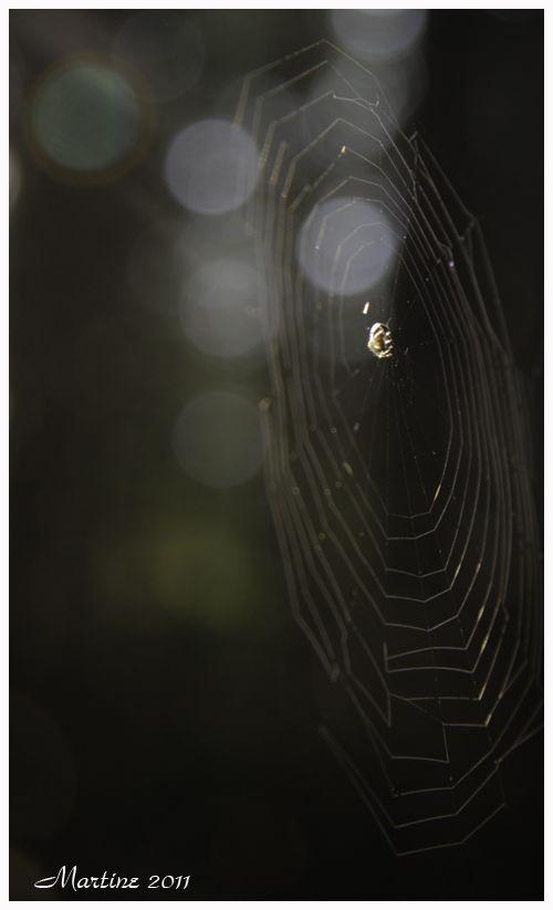 The Web - La Toile