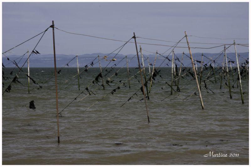 Fishing - Pêche
