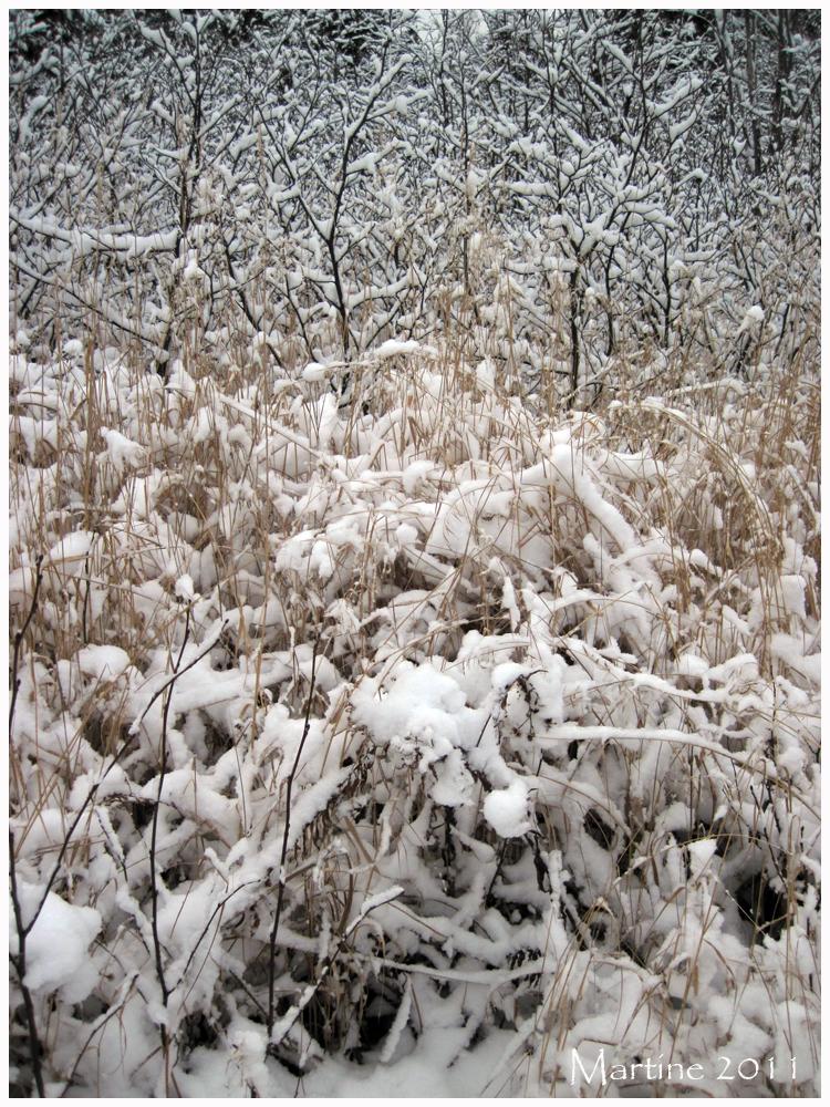 Winter beginning - Début de l'hiver