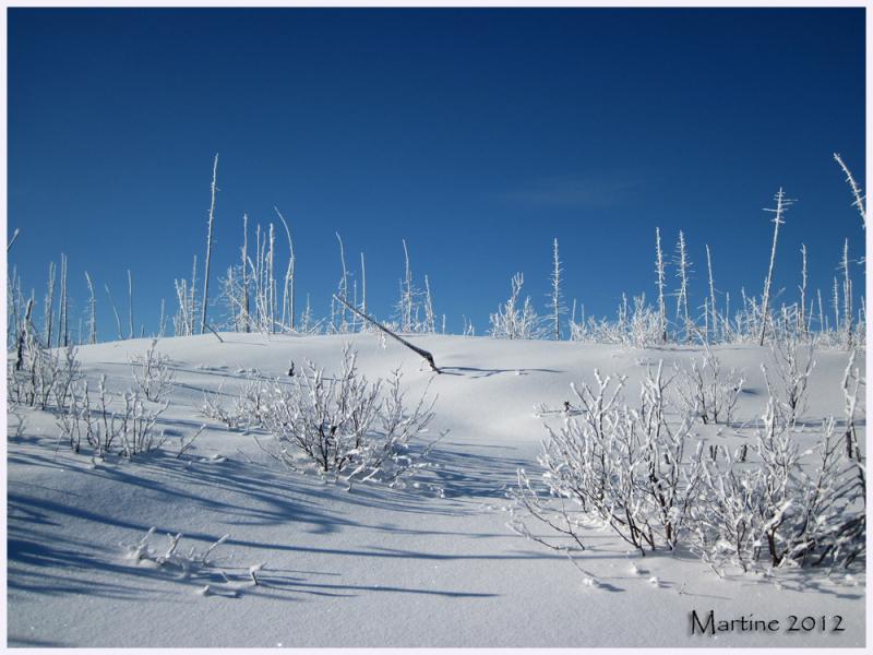 Winter scene - Scène d'hiver