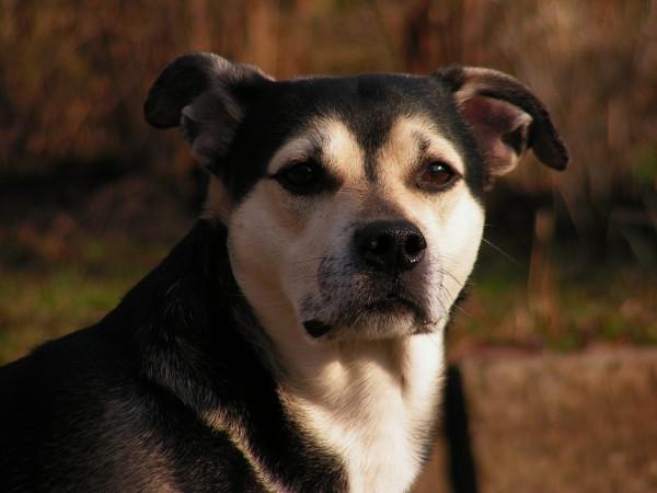 My dog. Again and again...