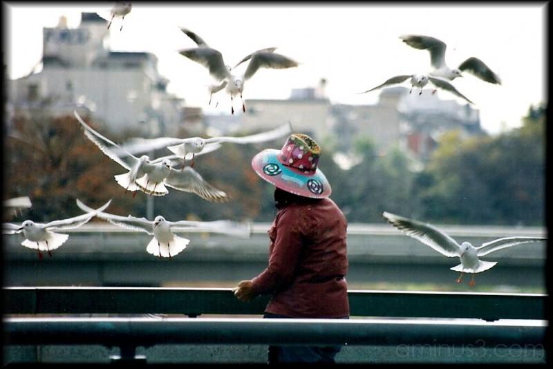 Lady Feeding Birds