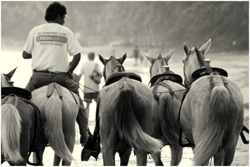 Horses on the Beach in Samara, Costa Rica