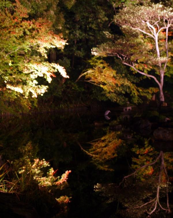 Light-up Chion Temple Kyoto Japan