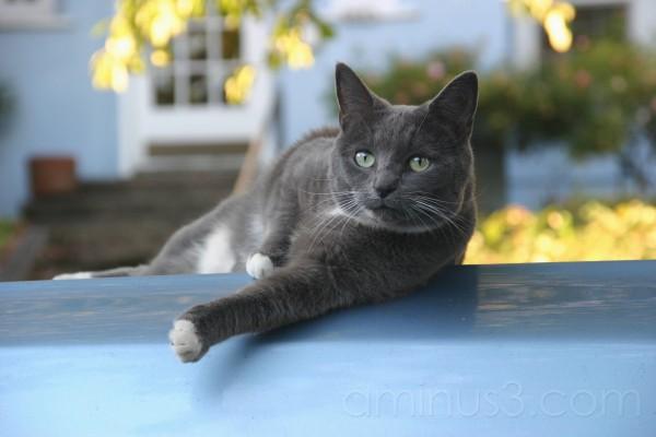 Bavi the Cat