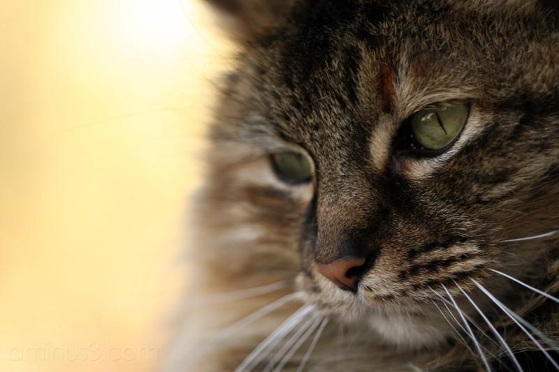 Kitty #2