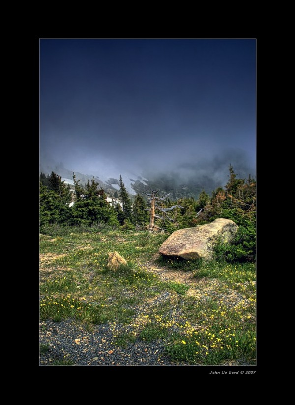 Among the Alpine in Rocky Mountain National Park,
