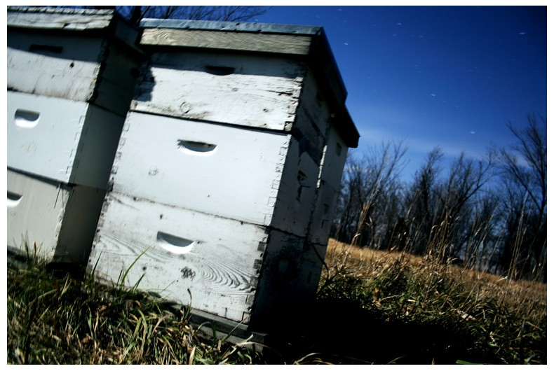 Bee Bins