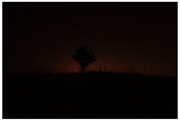 Tree Silhouette Dipper