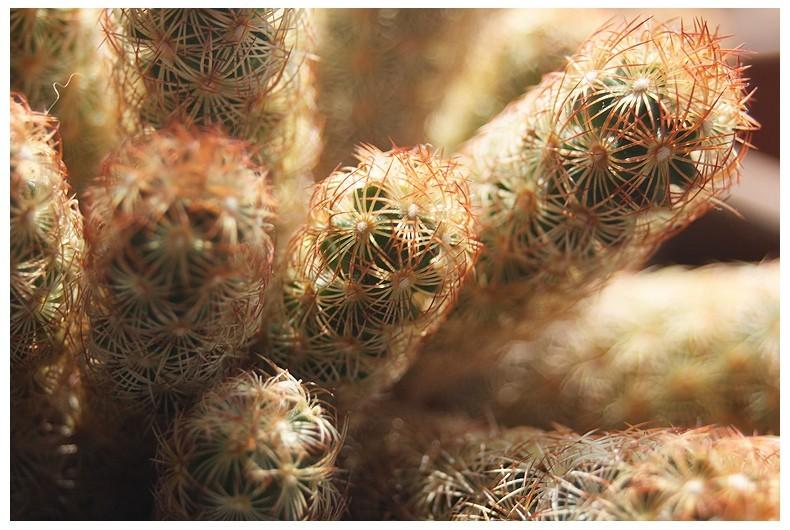 Cactus Molly Wint3r Aminus3 Macro