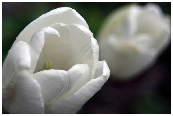 flower petals wint3r aminus3