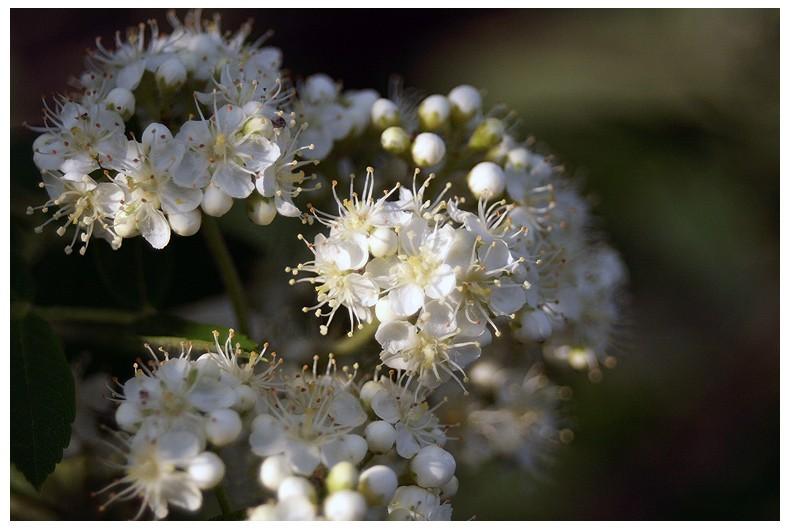 flower wint3r aminus3 Lilac
