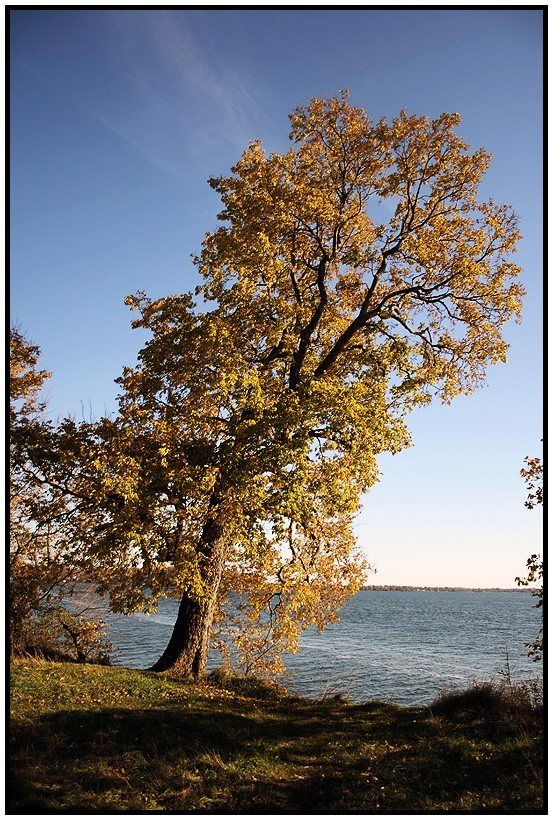 Governor's Island Tree Water Wisconsin