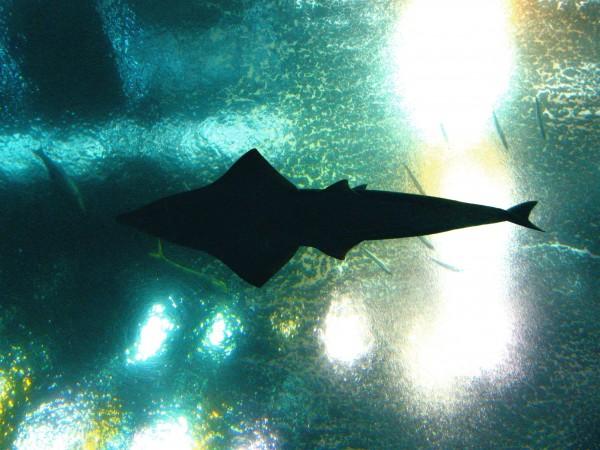 shark aquarium lights
