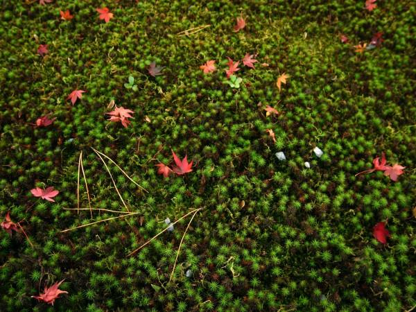 moss spread
