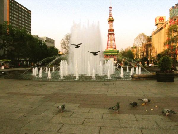 pigeons in hokkaido