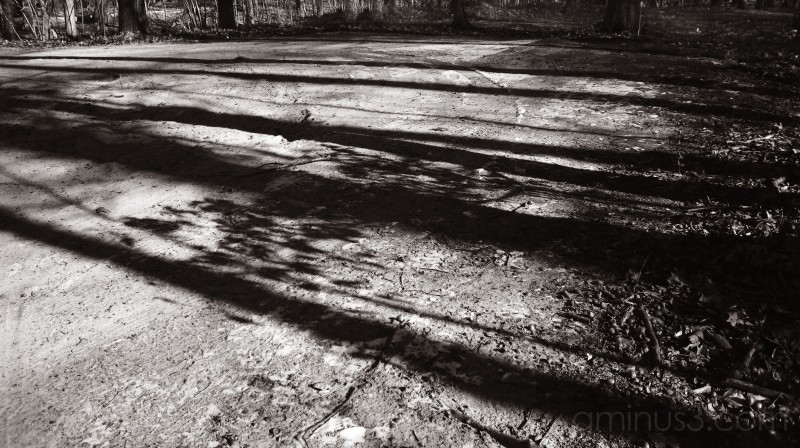 Shadowboxing (Campgaw Park 1 of 6)