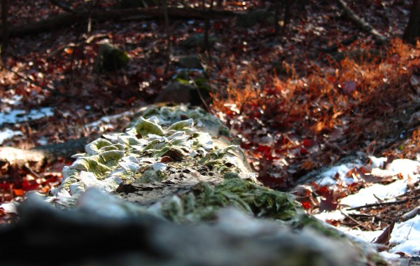 The Springtime of Tree Mold (4 of 6)
