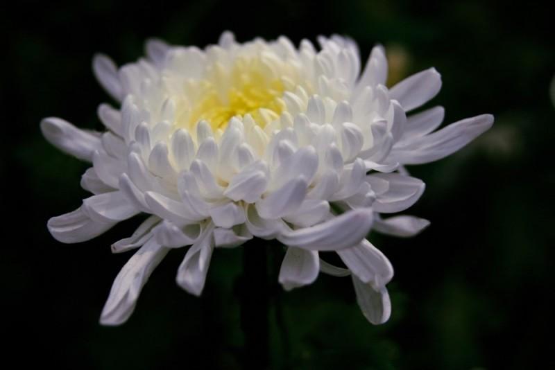 Universe in a Flower: A-tilt