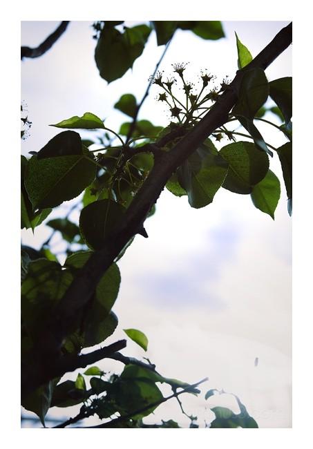 Suburbian Canopy, 2