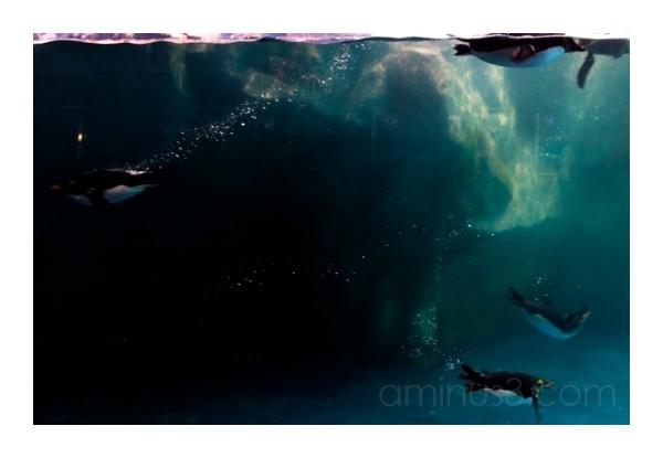 Penguin Water Ballet