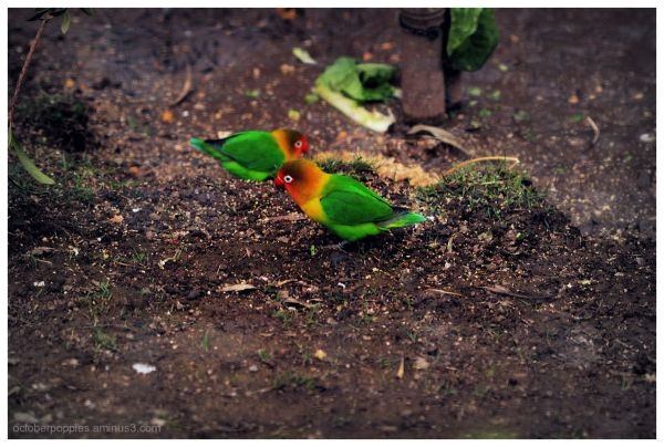 Grounds for Love(birds)