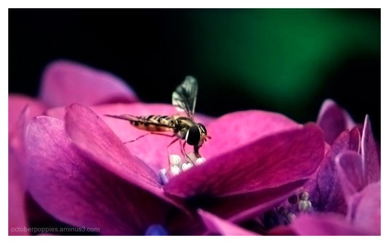 Bee....Fly...Bee?