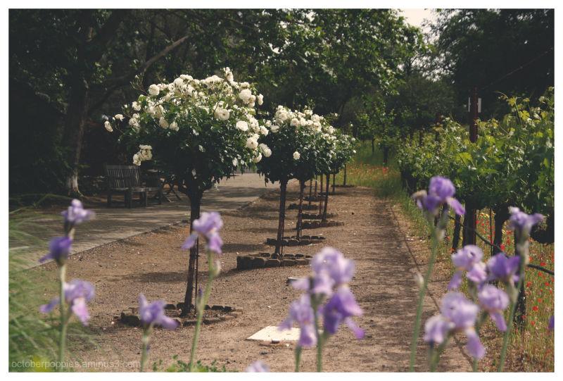 Violet Sentries