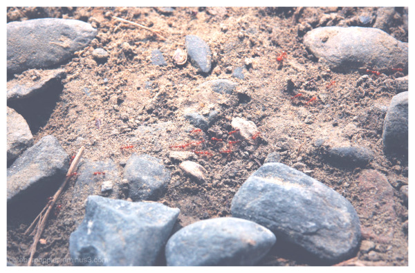 Even the Ants Are Red