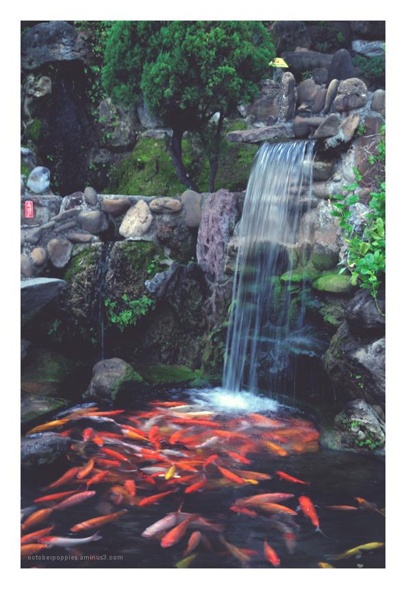 赤崁樓之魚