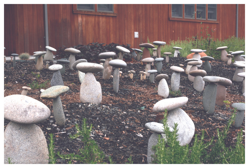 Stone Mushrooms in Wine Country