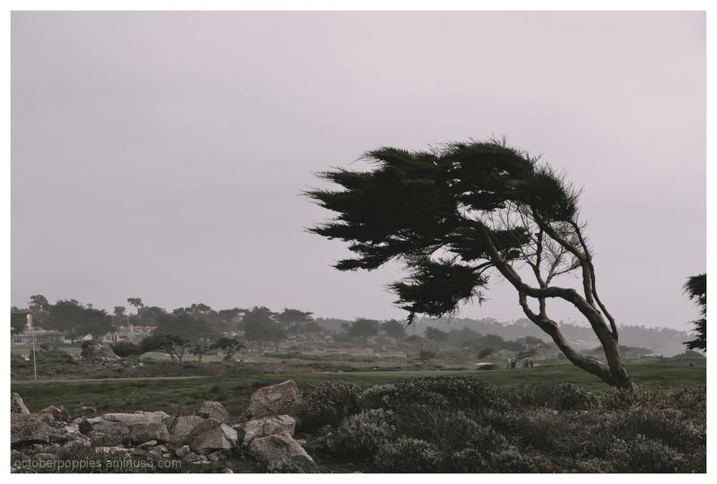 Dr Seuss in Monterey