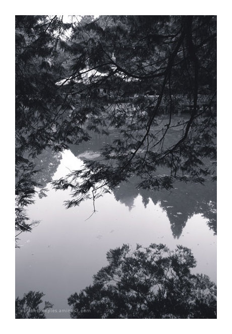 Woods and Water, 2