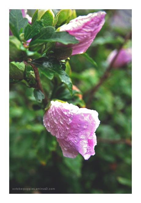 rainy day, 3