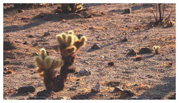 cactus garden begins here
