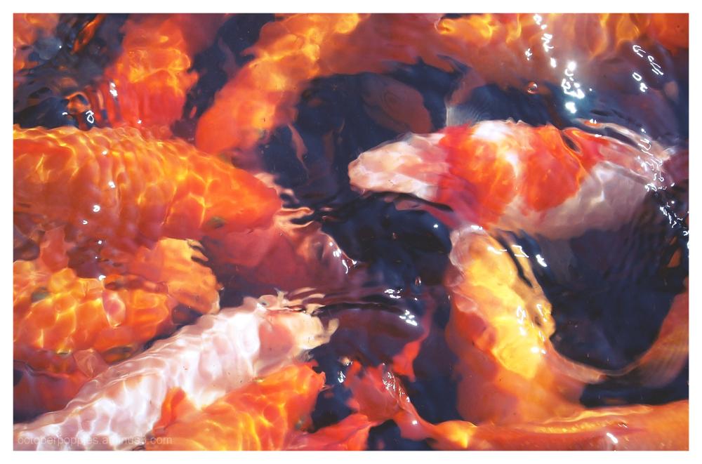 Fishconography